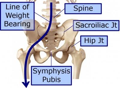 Hip diagram Weight bearing