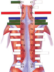 Chiropractors in Dundalk and Swords SEMG Scan