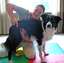 Surrey Animal Chiropractor adjusting a dog
