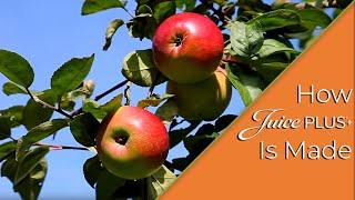 how-juiceplus-is-made
