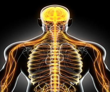 Oceanside,NY Chiropractor Nervous System