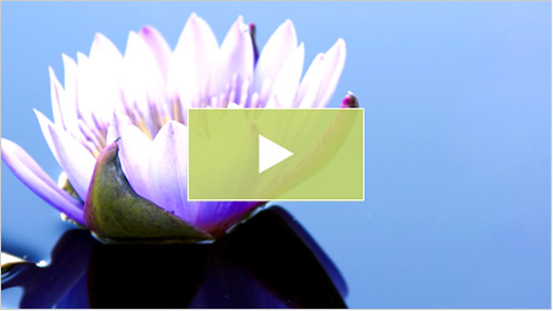 Restore Chiropractic video
