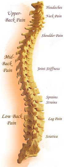 Meadowvale Family Chiropractic & Massage