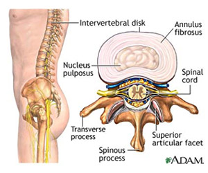 spinal-disc