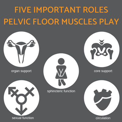 Roles of Pelvic Muscles