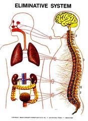 masche-chiropractic-eliminative-system