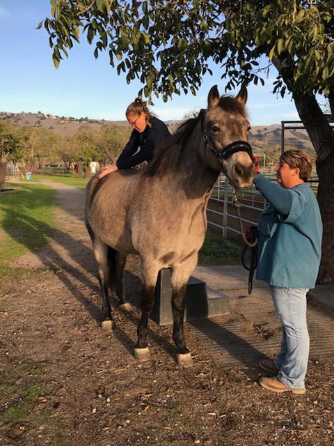 horse adjusting