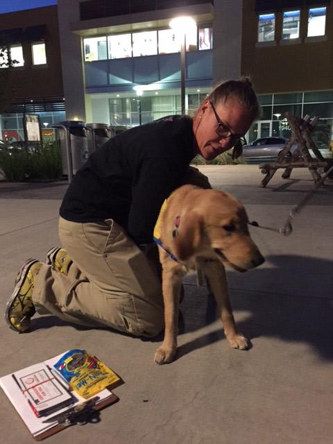 doctor adjusting a dog