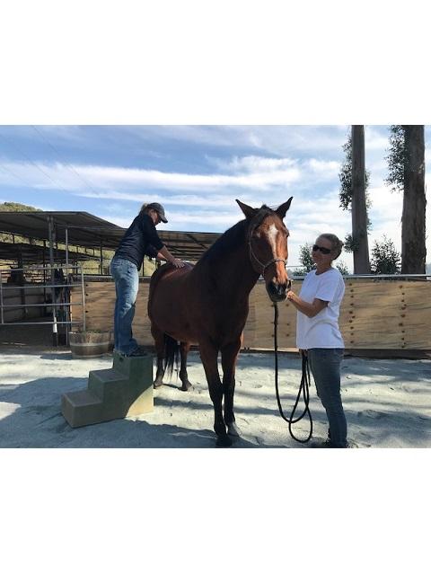dr adjusting a horse