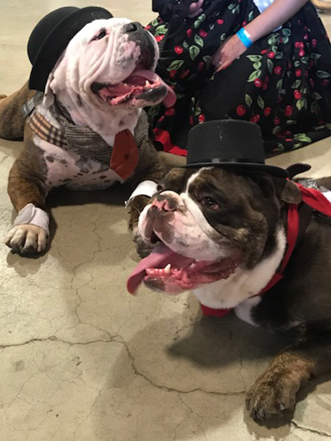 Dogs with tophats