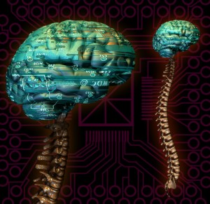 Healthy nervous system free of subluxations allows the brain and body to work effectively.