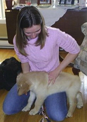 Dog Adjustment