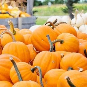 large bin of pumpkins