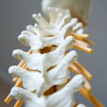 im-spine-how-are-you