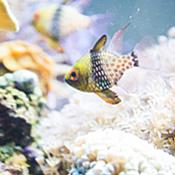 Small colored fish in tank