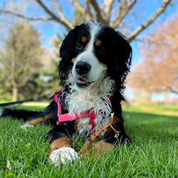 Layla the dog