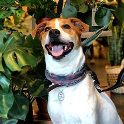 Mr. Milo the dog