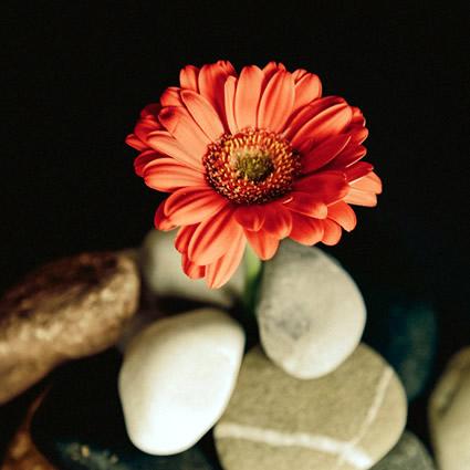 Beautiful flower and rocks