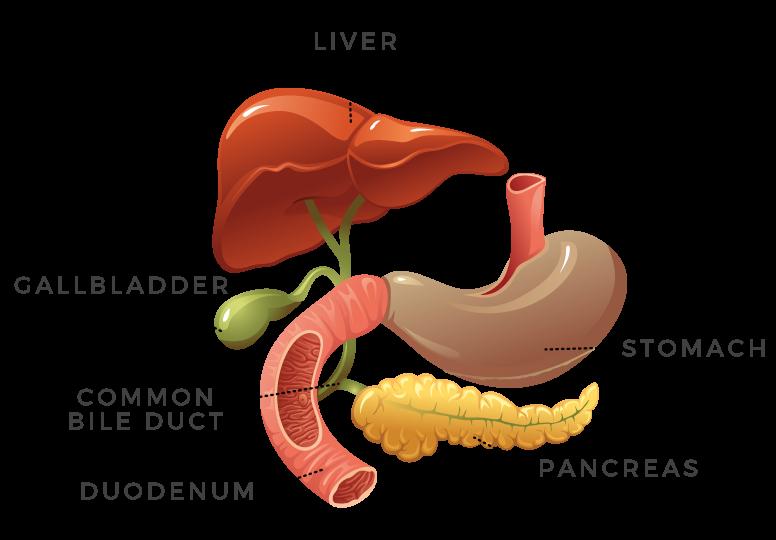 Gastrointestinal Section