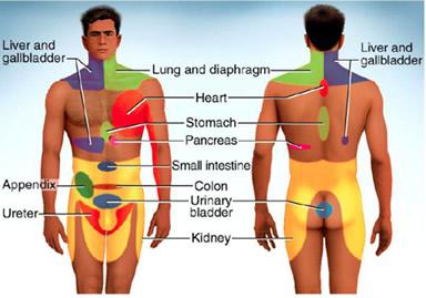 organ gland symptom referral patterns