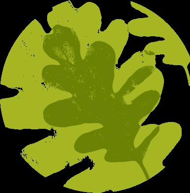 Oaktree leaf