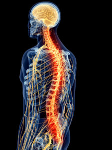 nervous-system-and-spine