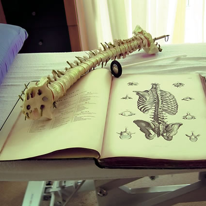 Spine model on chiropractic book