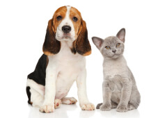 chiropractic for pets