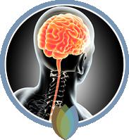 Chiropractic & Wellness in Shoreline