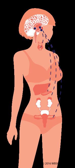 Hormonal Control System