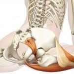 Piriformis Muscle Diagram