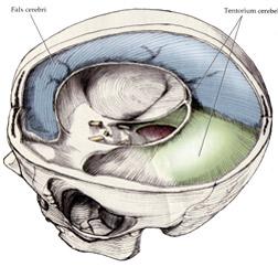Skull membrane
