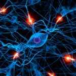nervous-system-connections-150x150