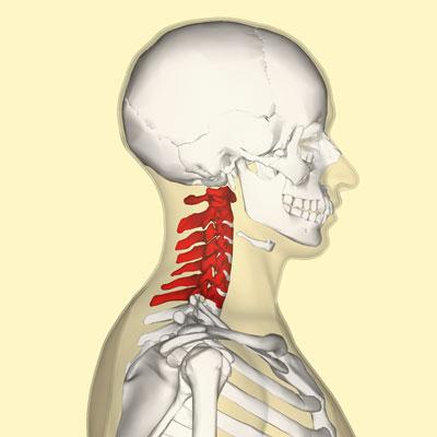 Neck Diagram