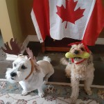 Tucker and Bodhi are eager to get back to their work in the office... soon we hope!