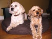 Bodhi and Tucker