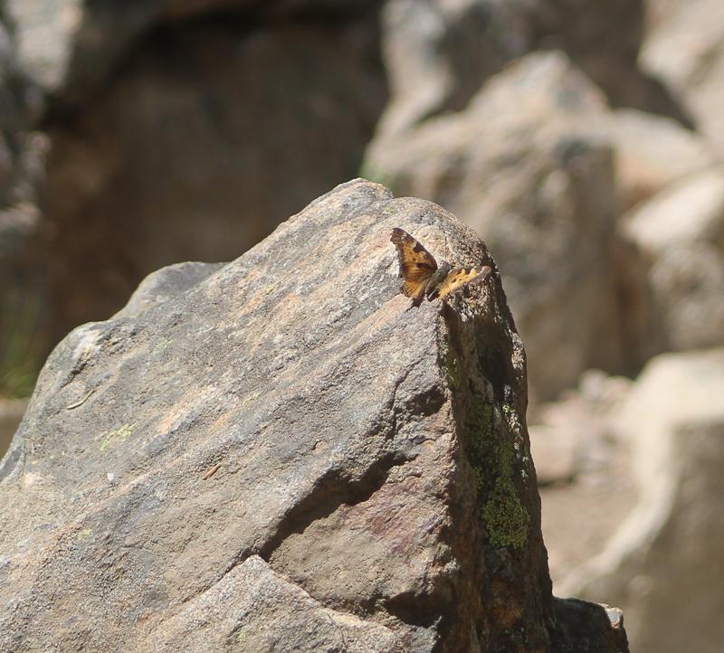 Butterfly Goose Creek, Ken Swaim, 6-20-21