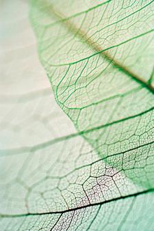 Close up of dried leaf