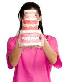 Dental hygienist holding up models of teeth