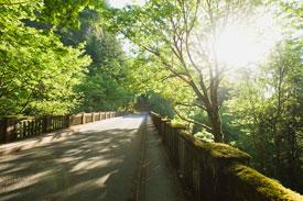 Bridge through woods