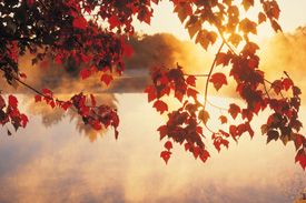 Fall colored leaves hanging over the water
