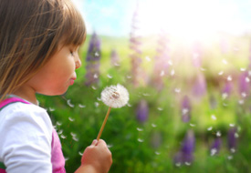 Woodbury allergies and asthma treatment at Seasons Family Chiropractic