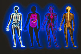 skeletal and nervous system silhouettes