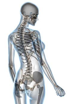 What to expect with chiropractic at Shelley Chiropractic