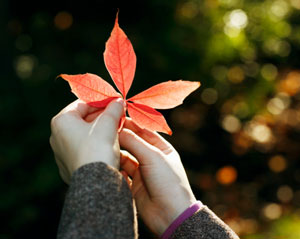 Woman holding a red leaf