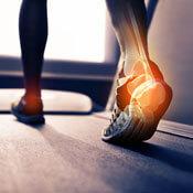 Illustration of inner bones of foot