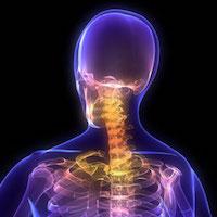 Transparent spine image