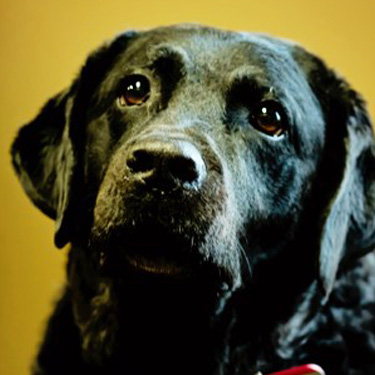 Office Dog, Sam