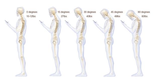 spine-study