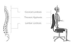 Skelteton Diagram in Chair